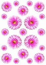 Fietsstickers Gerbera roze